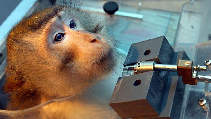 Besonders die Experimente mit Primaten sind umstritten.