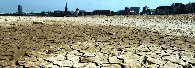 Keine Fotomontage: Aufgerissene Erde im ausgetrockneten Rheinufer in Düsseldorf. (Archivfoto vom 16.07.2003).