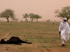 Vor allem in Trockengebieten kommt es zur Wüstenbildung.