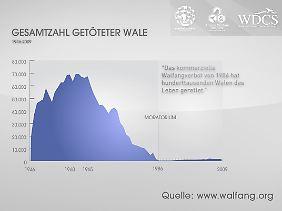 Die Statistik zeigt die Gesamtzahl der getöteten Wale seit 1946 - und die Wirksamkeit des Moratoriums.