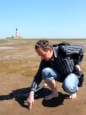 Das Wattenmeer ist Heimat für etwa 10.000 Arten von Einzellern, Pflanzen, Pilzen und Tieren.