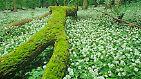 Naturwunder-Wahl 2010: Die schönsten Wälder Deutschlands