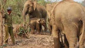 """""""Land der Millionen Elefanten"""": Hilfe für bedrohte Dickhäuter in Laos"""