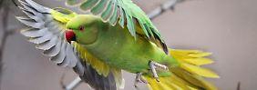 800 neue Tier- und Pflanzenarten: Neobiota belasten Ökosystem