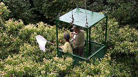 Die Artenvielfalt auf kleinstem Raum ist im Regenwald deutlich höher als angenommen.