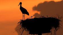 Wenn das Nest leer bleibt, kann das an vielen Faktoren liegen.