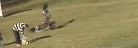 Spektakuläres Adler-Video: Baby-Diebstahl fand nicht statt