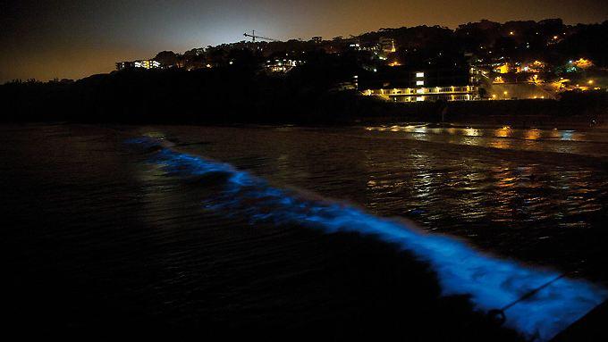 Vor der Küste Kaliforniens nahe San Diego leuchten die Wellen.