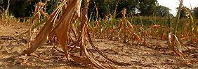 Schwere Dürren und Unwetter: In den USA wird es heißer
