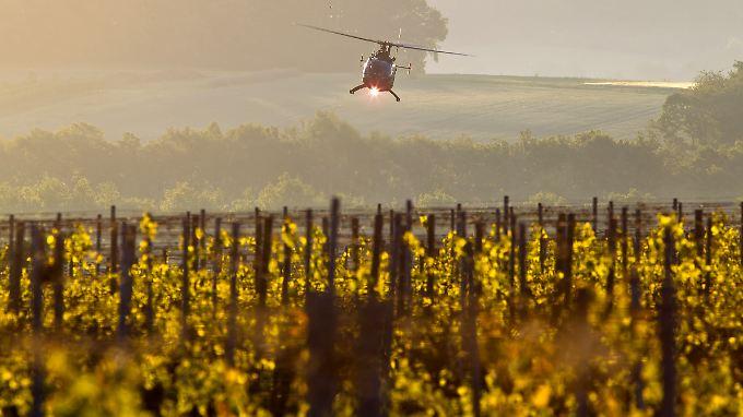 Bislang werden Weinberge oft von herkömmlichen Hubschraubern aus gespritzt.