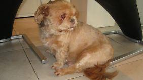 Neben einigem an Gewicht hat Daisy auch viele Haare verloren, was sie gleich noch viel schlanker aussehen lässt.