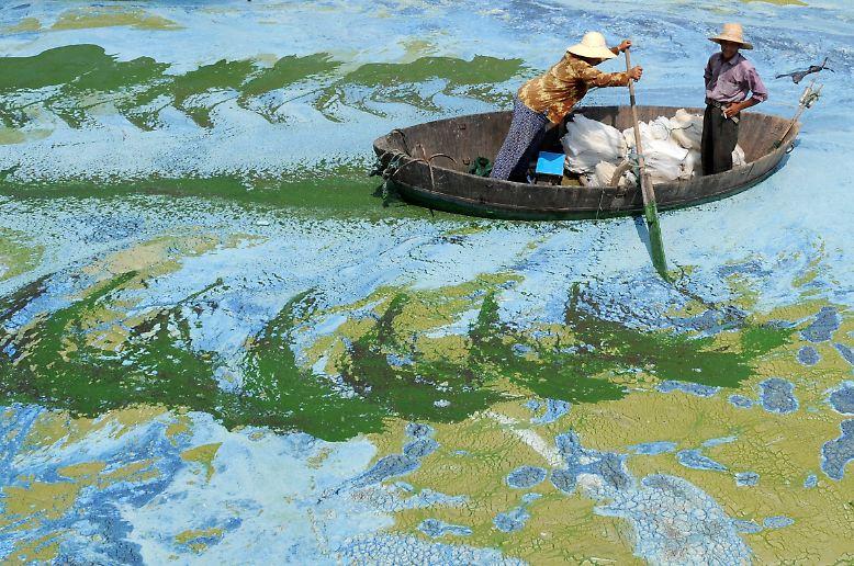 Es ist ein Bild von bizarrer Schönheit - und doch ist es alles andere als eine Idylle. Diese chinesischen Fischer kämpfen sich durch den mit Algen und Düngemittel verseuchten Chaohu-See in Hefei.