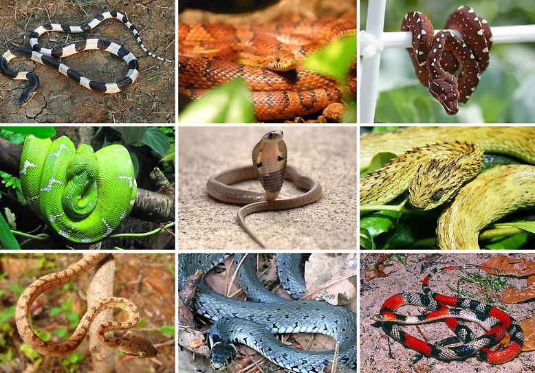 3485 Schlangenarten hat man bisher entdeckt, und wahrscheinlich sind viele noch gar nicht bekannt.