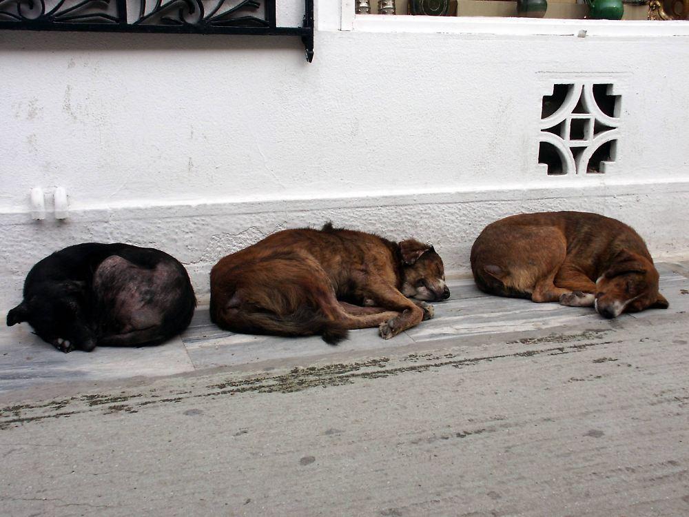 durch eingriffe des menschen hunde haben viele erbgutfehler n. Black Bedroom Furniture Sets. Home Design Ideas