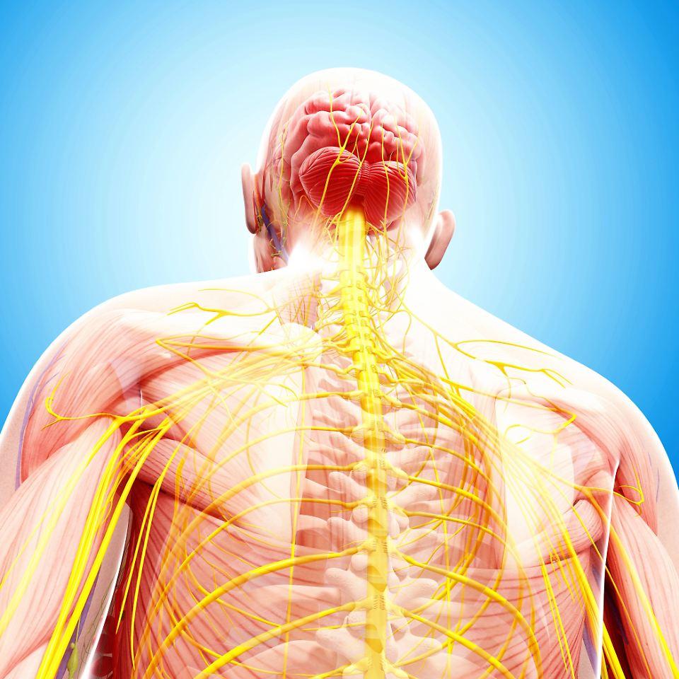 Bei Schädigung des Rückenmarks: Schrittmacher macht Bewegungen ...