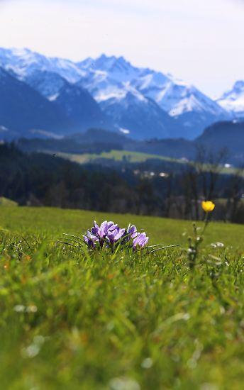 Im Süden Deutschlands hagelt es Temperaturrekorde, ...