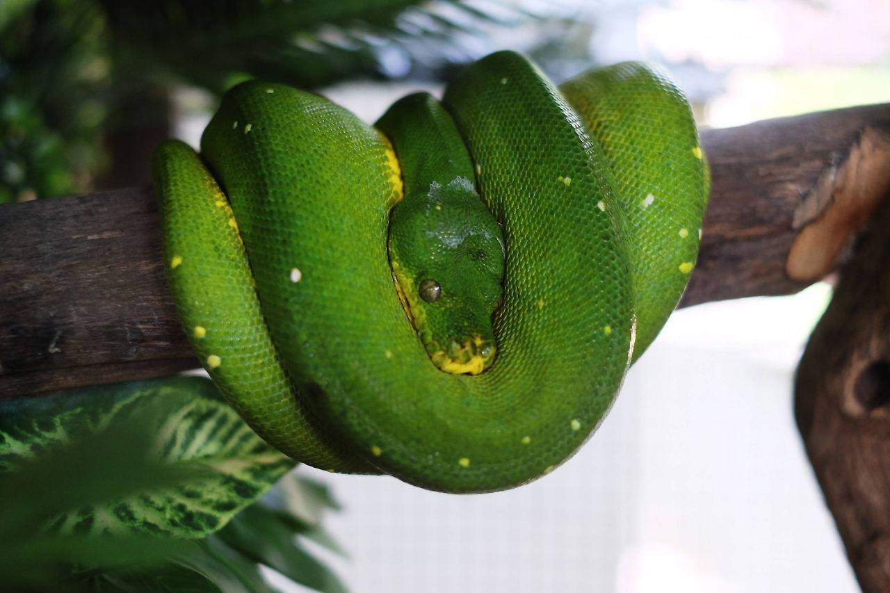 Gliedmaßenwachstum gestoppt: Wie Schlangen ihre Beine verloren - n-tv.de