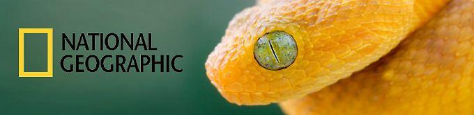 Sendung: National Geographic