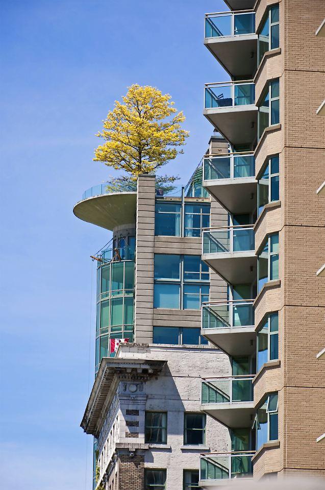 schleichende bepflanzung darf ein baum auf den balkon. Black Bedroom Furniture Sets. Home Design Ideas