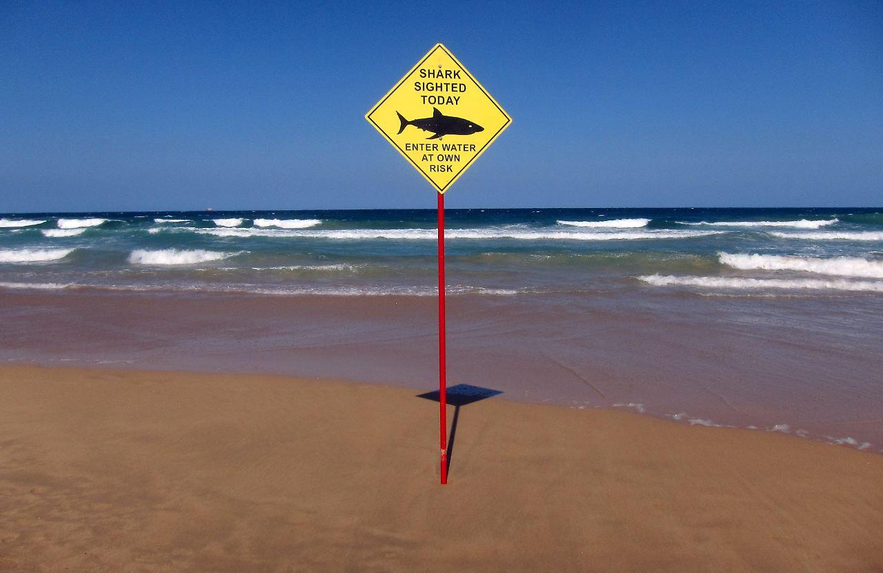 Sharks In Surf Myrtle Beach