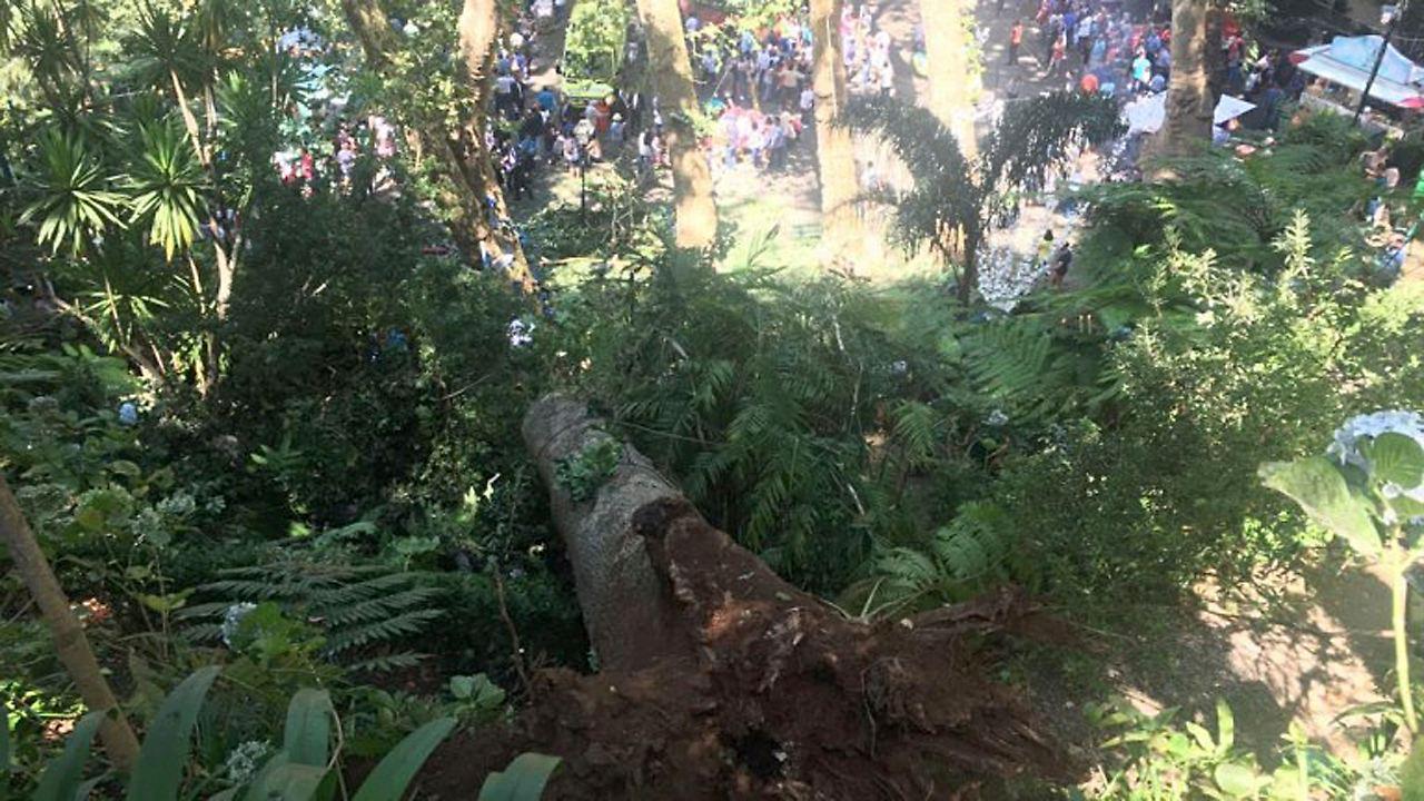 Drama auf Madeira: Elf Tote durch umstürzenden Baum