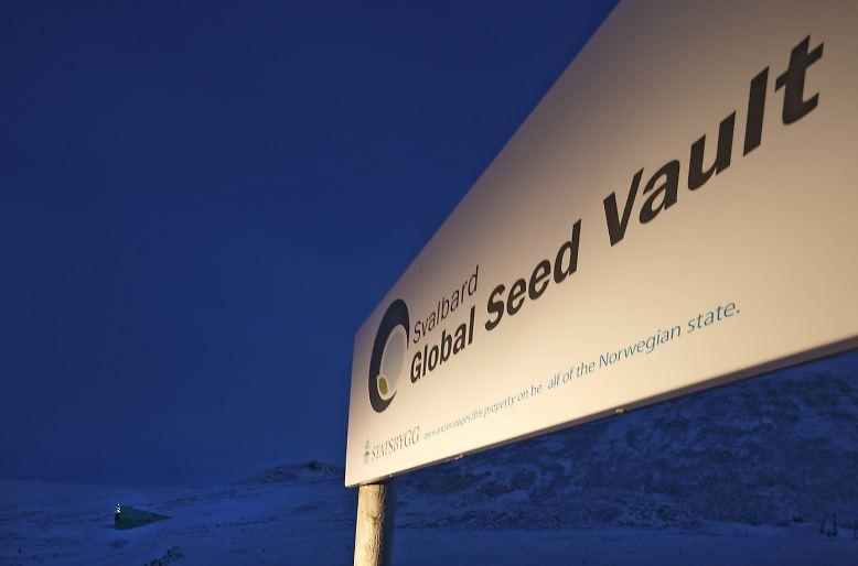 ... größten Saatgut-Tresors der Welt, das vor zehn Jahren im ...