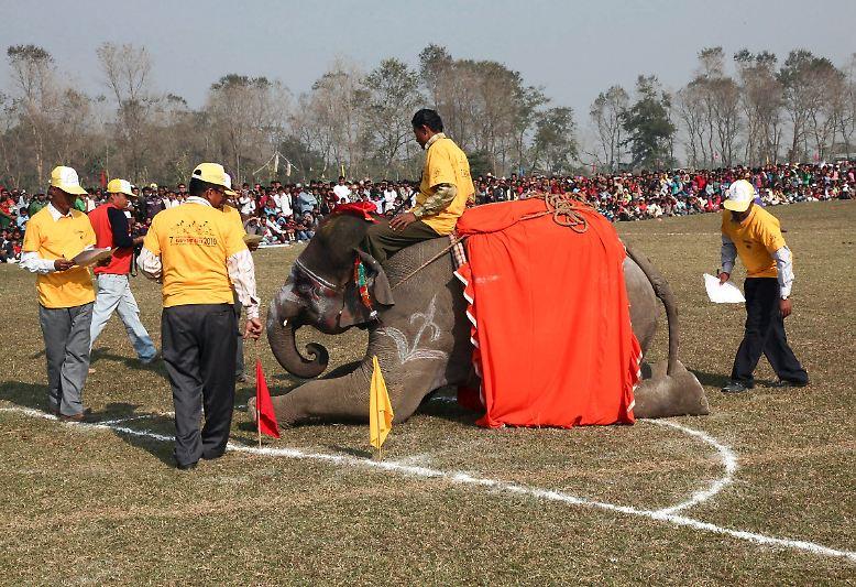 Dutzende Elefanten haben sich  ...