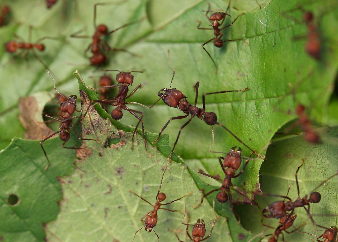 zu eiwei reiches essen viele proteine verk rzen ameisen leben n. Black Bedroom Furniture Sets. Home Design Ideas