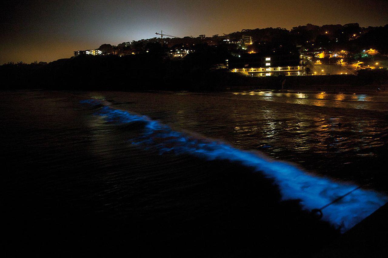 blitzt wenn sie ger ttelt wird alge l sst das meer blau leuchten n. Black Bedroom Furniture Sets. Home Design Ideas
